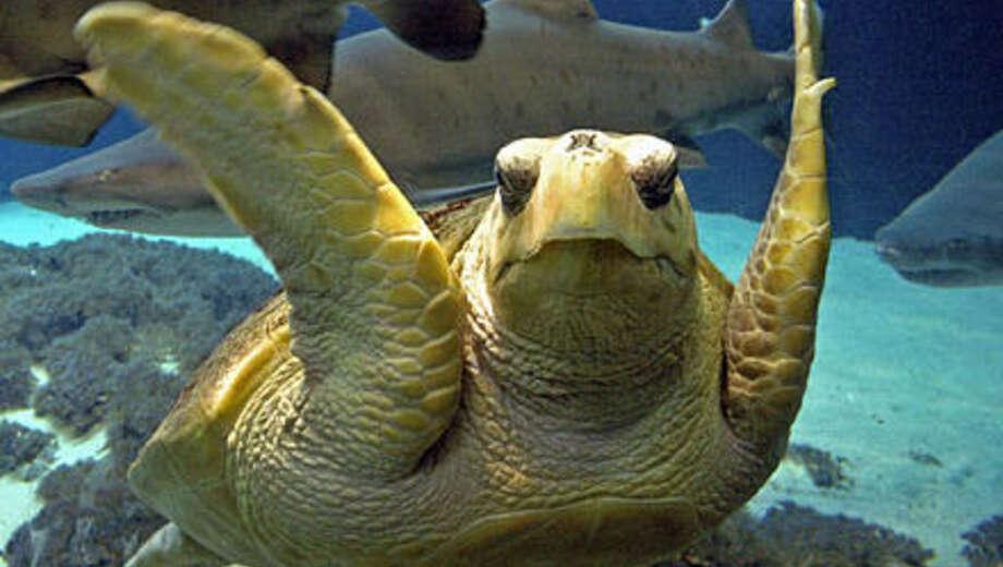 New York Aquarium | Reviews Of New York Aquarium In Brooklyn Ny Goldstar