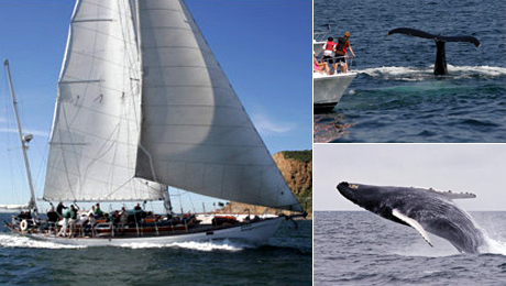 Whale Watching and Sailing Excursion on the Vintage Yacht Jada $60.00 ($120 value)