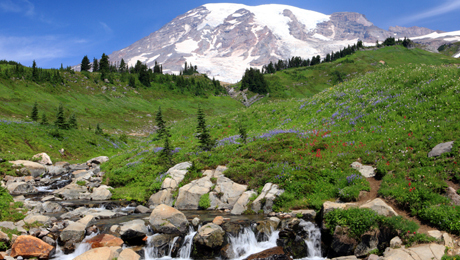 Experience the Wild Beauty of Mt. Rainier on a Day-Long Tour $56.00 ($112 value)