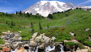 Mt. Rainier Day Tour