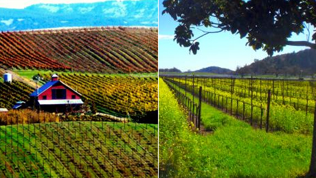 Redwoods & Wine Country Escape Tour From Extranomical Adventures $52.50 ($105 value)