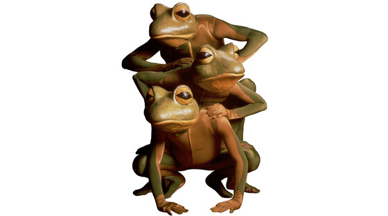 Frogs 1112131