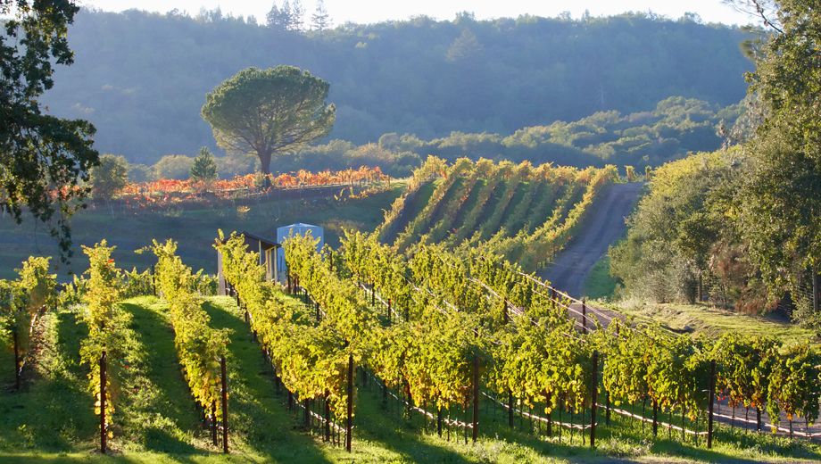 Napa and Sonoma Wine Lovers' Tour and Tasting $44.00 ($88 value)