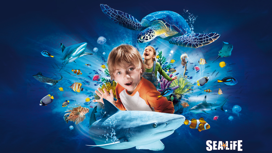 Encounter Ocean Creatures at SEA LIFE Grapevine $9.00 ($16 value)