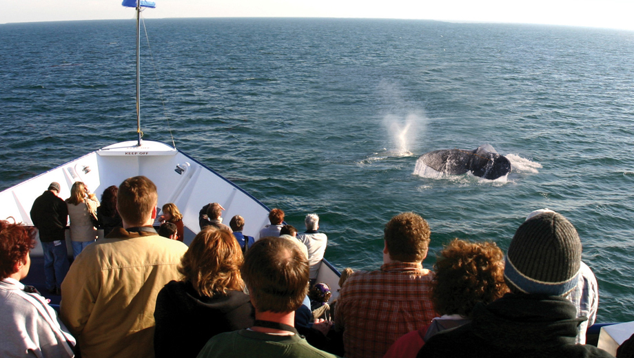 Sea Life Galore on a Hornblower Whale & Dolphin Watching Cruise $18.50 - $21.00 ($37 value)