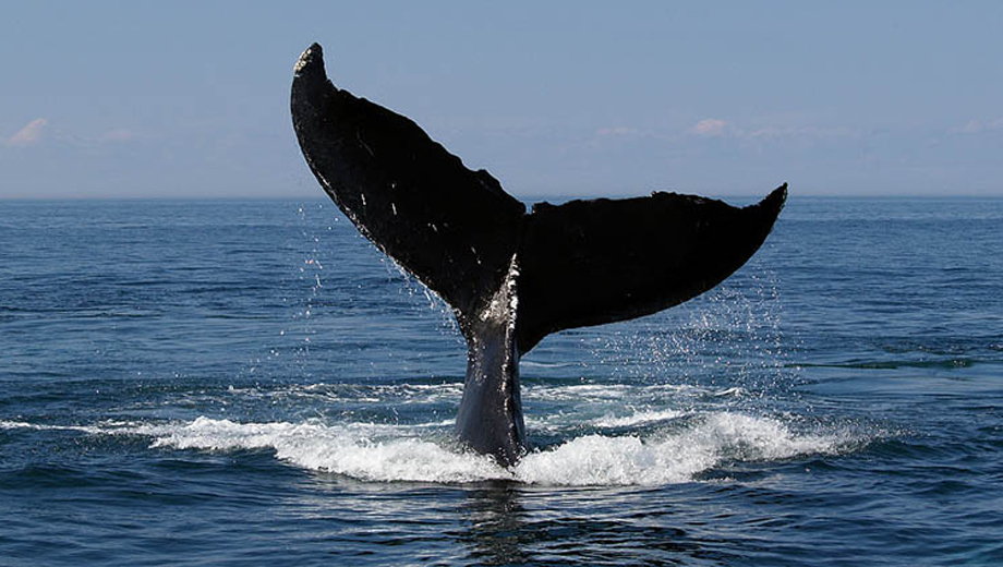 Gray Whale Watching Boat Trips Off the Coast of San Diego $18.00 ($45 value)