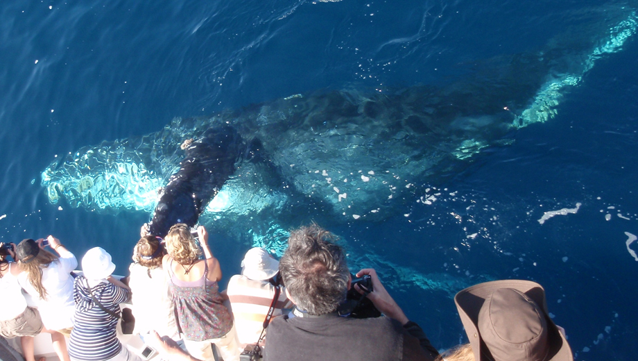 See Whales and Dolphins in Newport Beach's Huge Marine Sanctuary With Davey's Locker Tours $3.50 - $13.00 ($29.5 value)