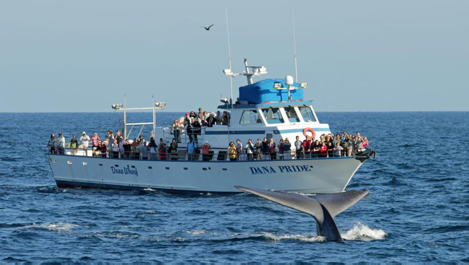Whale & Dolphin Watching: An Evening Trip From Dana Point $10.00 ($25 value)