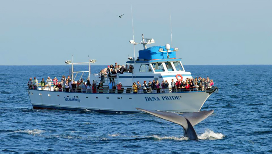 Morning Whale & Dolphin Watching From Dana Point $15.00 ($45 value)