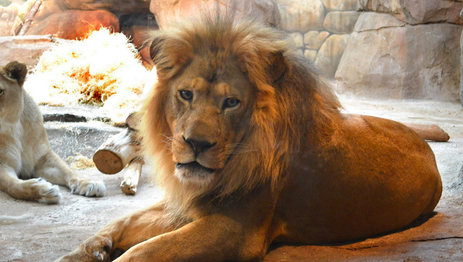 Wine Tasting at the Zoo: Have a Glass With the Lions and Tigers $23.00 ($46 value)