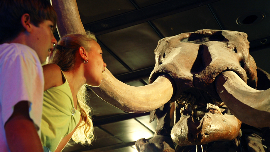 Houston Museum of Natural Science: Exhibit Hall Admission $9.00 ($20 value)