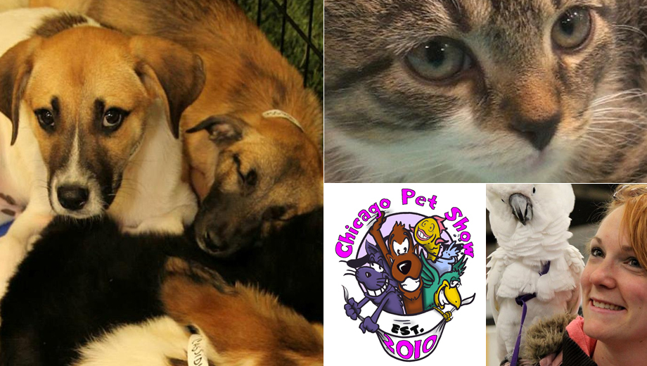 Dogs, Cats, Turtles -- Oh My! See It All at the Chicago Pet Show COMP - $5.00 ($7 value)