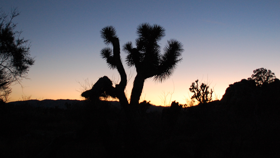 Halloween Twilight Tour of Joshua Tree: Ghost Stories, Dead Celebs & Alien Architecture $89.00 ($189 value)