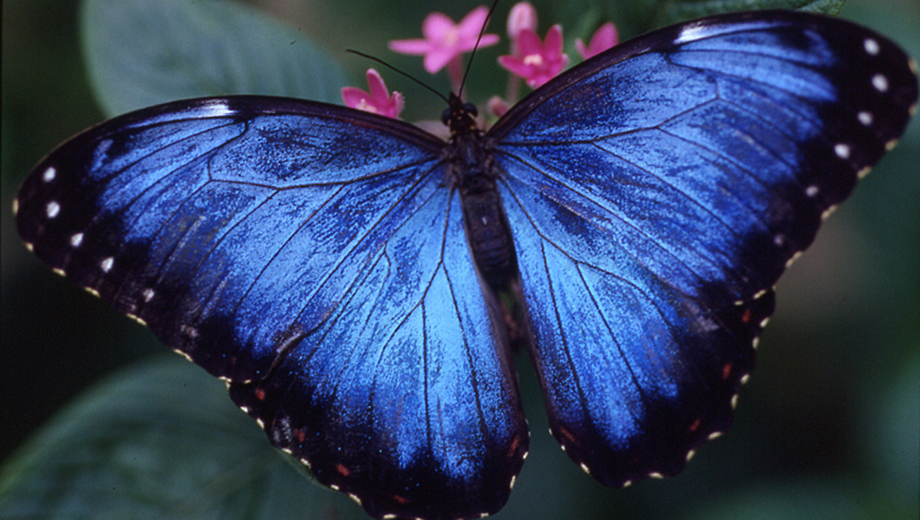 Butterfly Habitat & Exhibit Hall: Houston Museum of Natural Science $14.00 ($28 value)