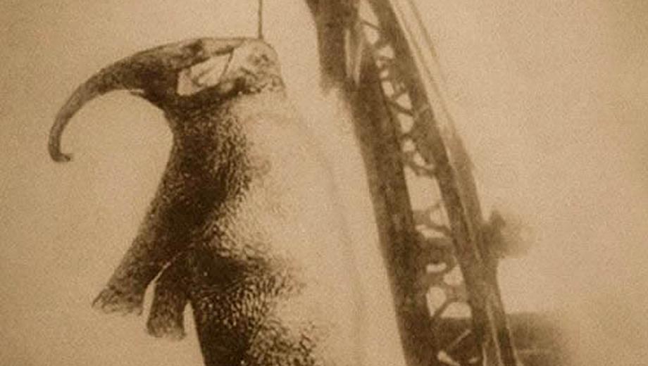 One-Man Show Explores True Story of Elephant Hanging,