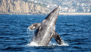 1422495672 whale and dolphin watching cruises with daveys locker tickets