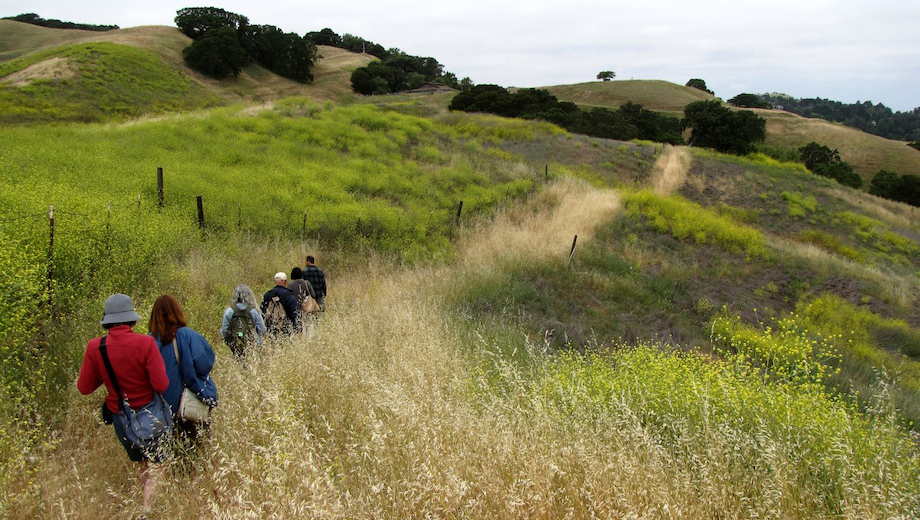 Eat Wild Plants on a Guided Tour in the Hills East of Caldecott Tunnel $20.00 ($40 value)