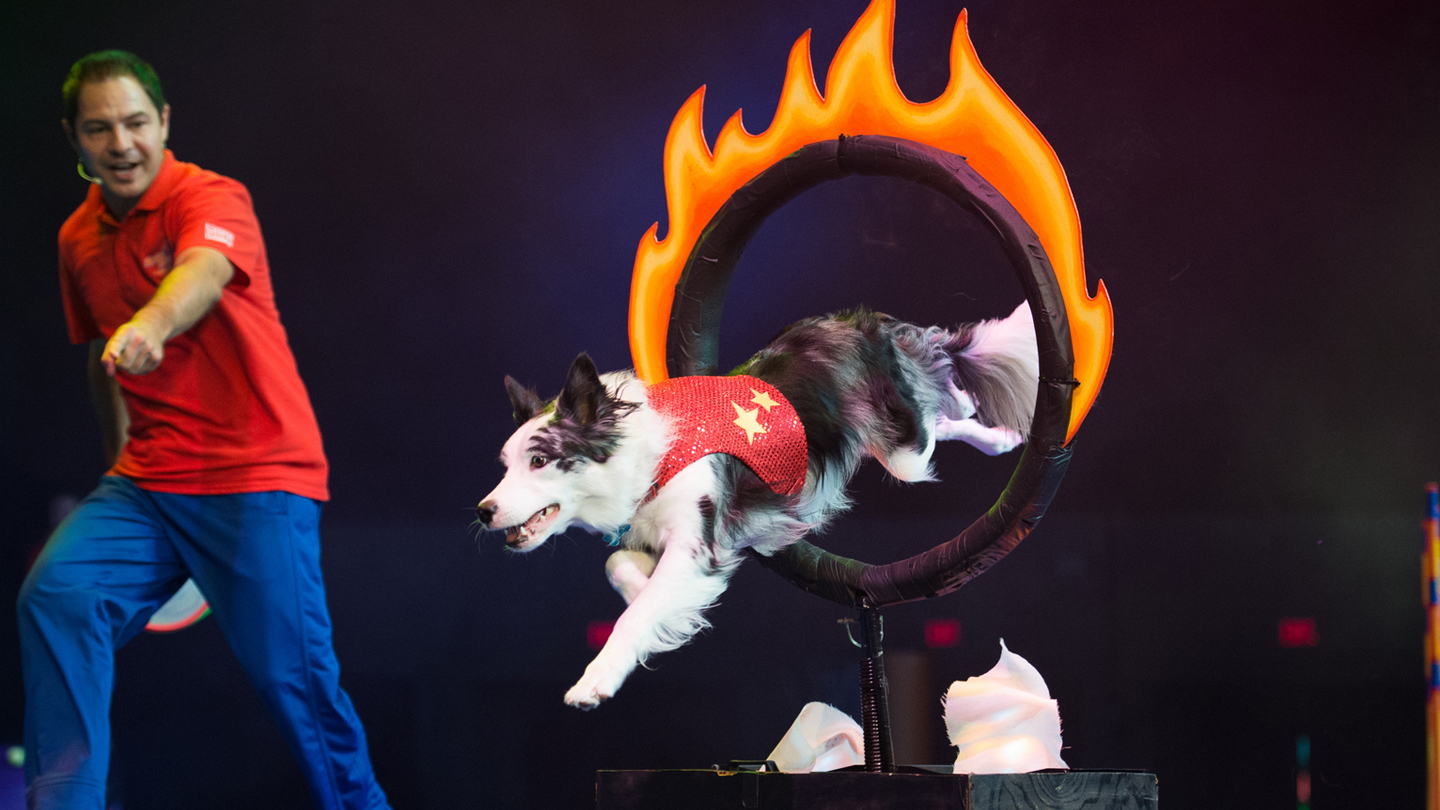 Canine Stars Perform in