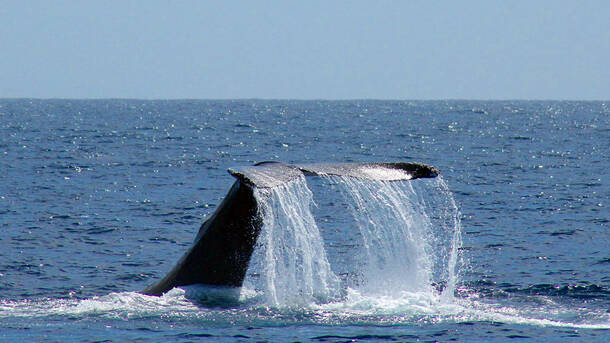 oceanside whale and dolphin tours san diego tickets 15 at