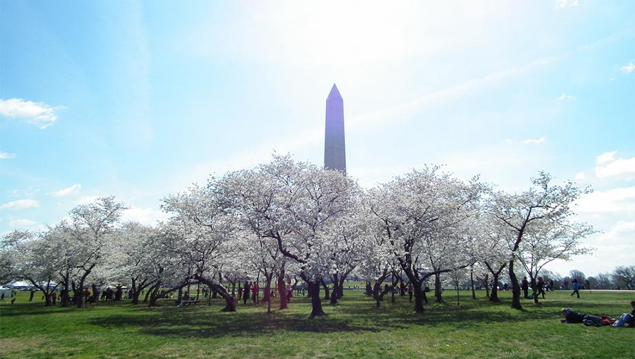 Great Cherry Blossom Scavenger Hunt of Washington, D.C. $29.50 ($59 value)