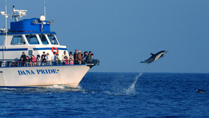 1441323273 evening whale and dolphin watching tickets