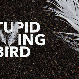 Stupid F**king Bird