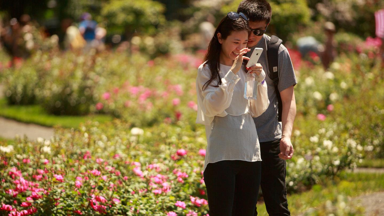 Rose Garden Weekend: Beautiful Blooms, Live Music, Gardening Experts & More $17.00 ($25 value)