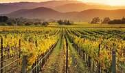Napa Valley Wine Country Tours Tickets