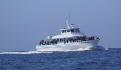 Sea Goddess Whale Watching Tickets