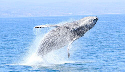 Dana Wharf Sportfishing and Whale Watching Tickets