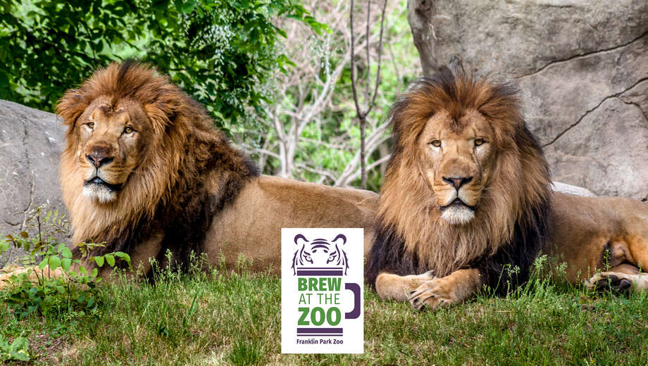 1468286381 5266843 lion brothers   frankln park zoo tickets