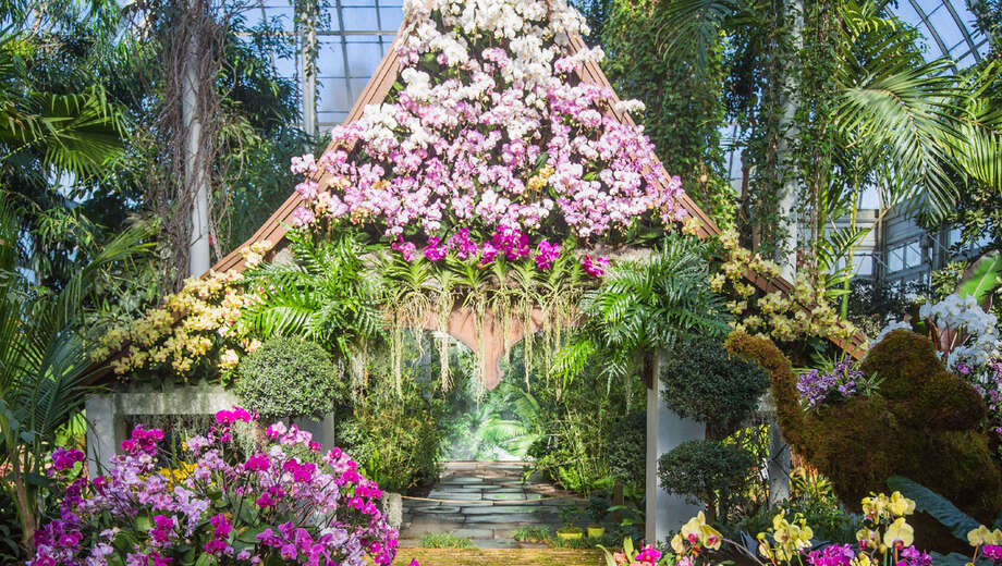 The Orchid Show Thailand at NYBG New York Tickets 5 1750