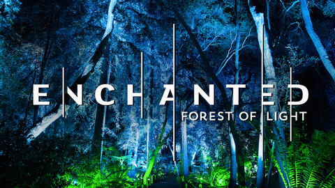 """Descanso Gardens -- """"Enchanted: Forest of Light"""""""