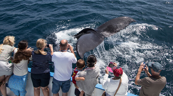 1498065686 whale and dolphin watching cruises with daveys locker tickets