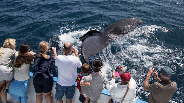 Whale And Dolphin Watching Cruises With Davey S Locker
