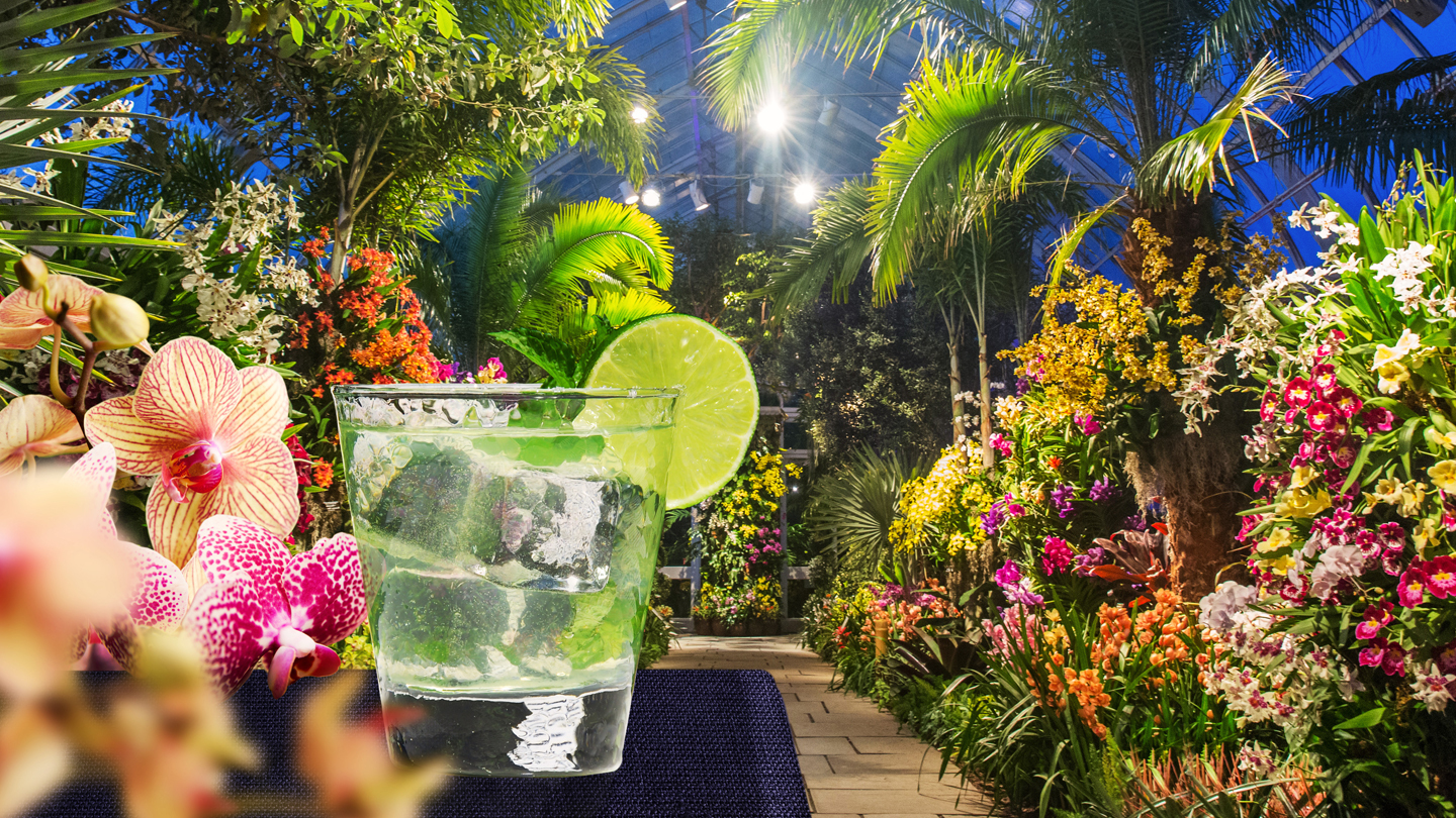 """""""Orchid Evenings"""": Experience the Energy & Nightlife of Singapore"""