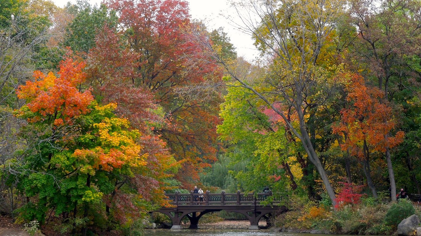 """Central Park Secrets"" Walking Tour"
