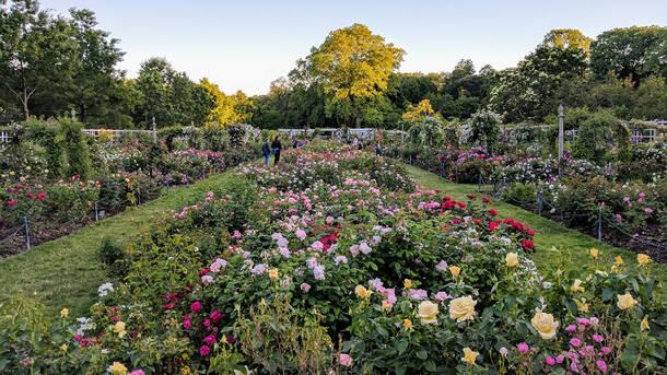brooklyn botanic garden - Brooklyn Botanic Garden
