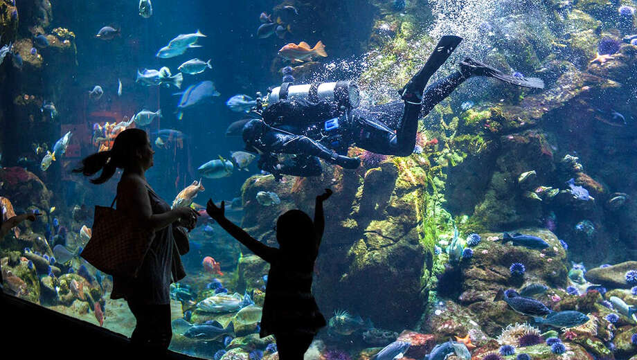 1538696458 california academy of sciences tickets