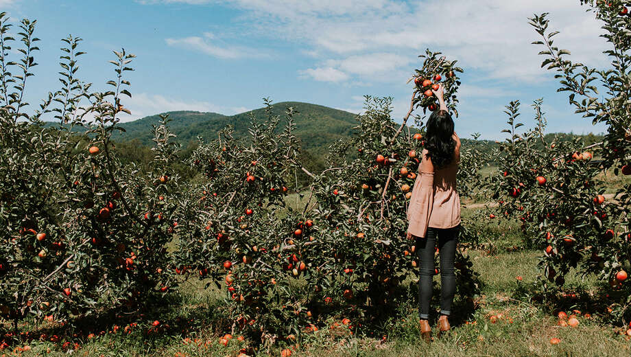 1539102891 apple picking day trip from nyc tickets