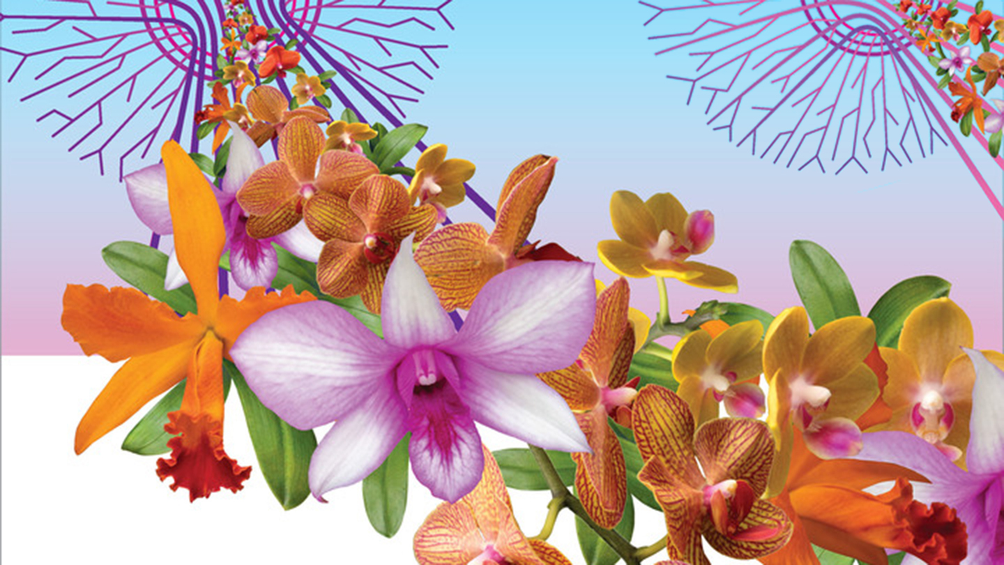 """""""The Orchid Show"""" Honors Singapore's Beauty"""