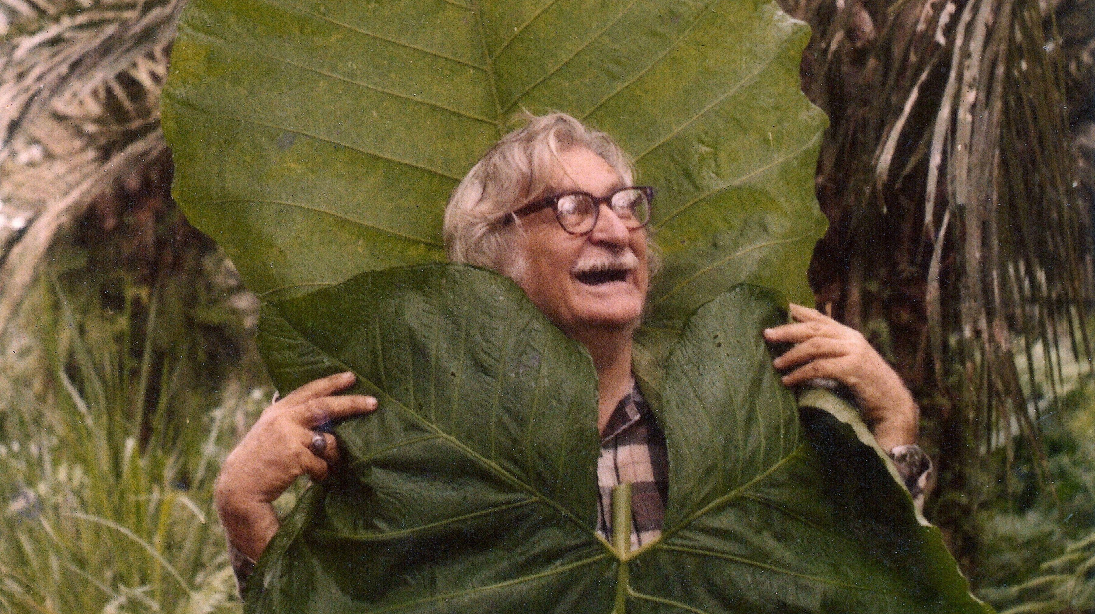 Garden Tribute to Brazil's Foremost Landscape Designer