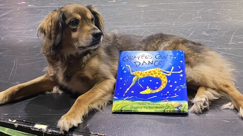 Virtual Story Time With Bravo the Theatre Dog