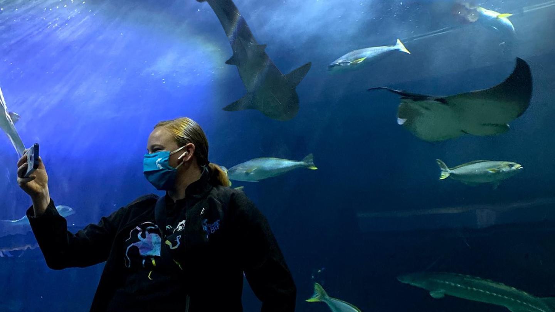 Virtual Aquarium Tour Experience