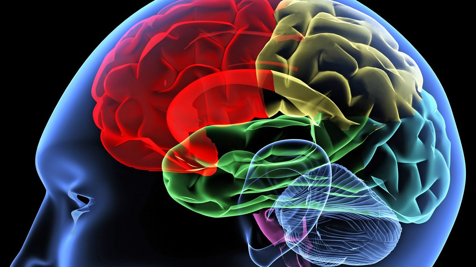 New Insights Into Women's Brain Health and Protecting The Female Brain - Online