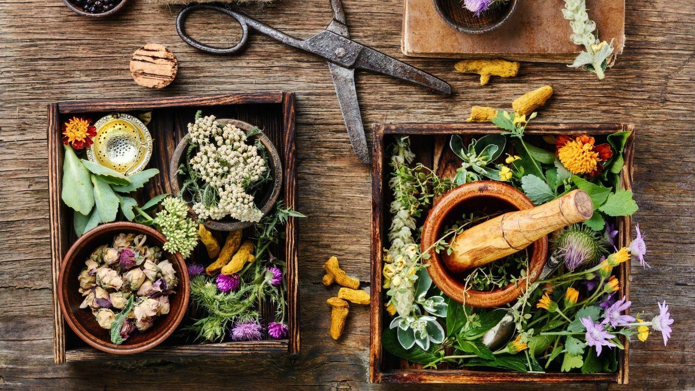 Herbalism: Longevity Herb Recipes - Online