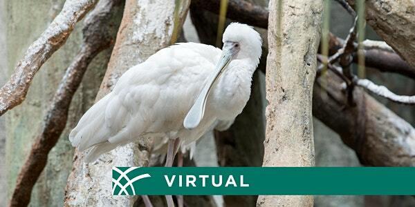 Live Virtual Zoo Tour