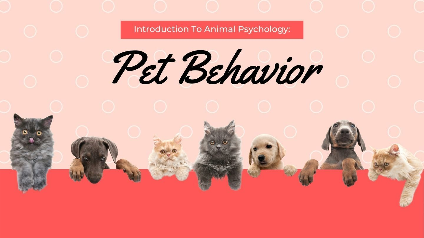 Introduction To Animal Psychology: Pet Behavior - Online