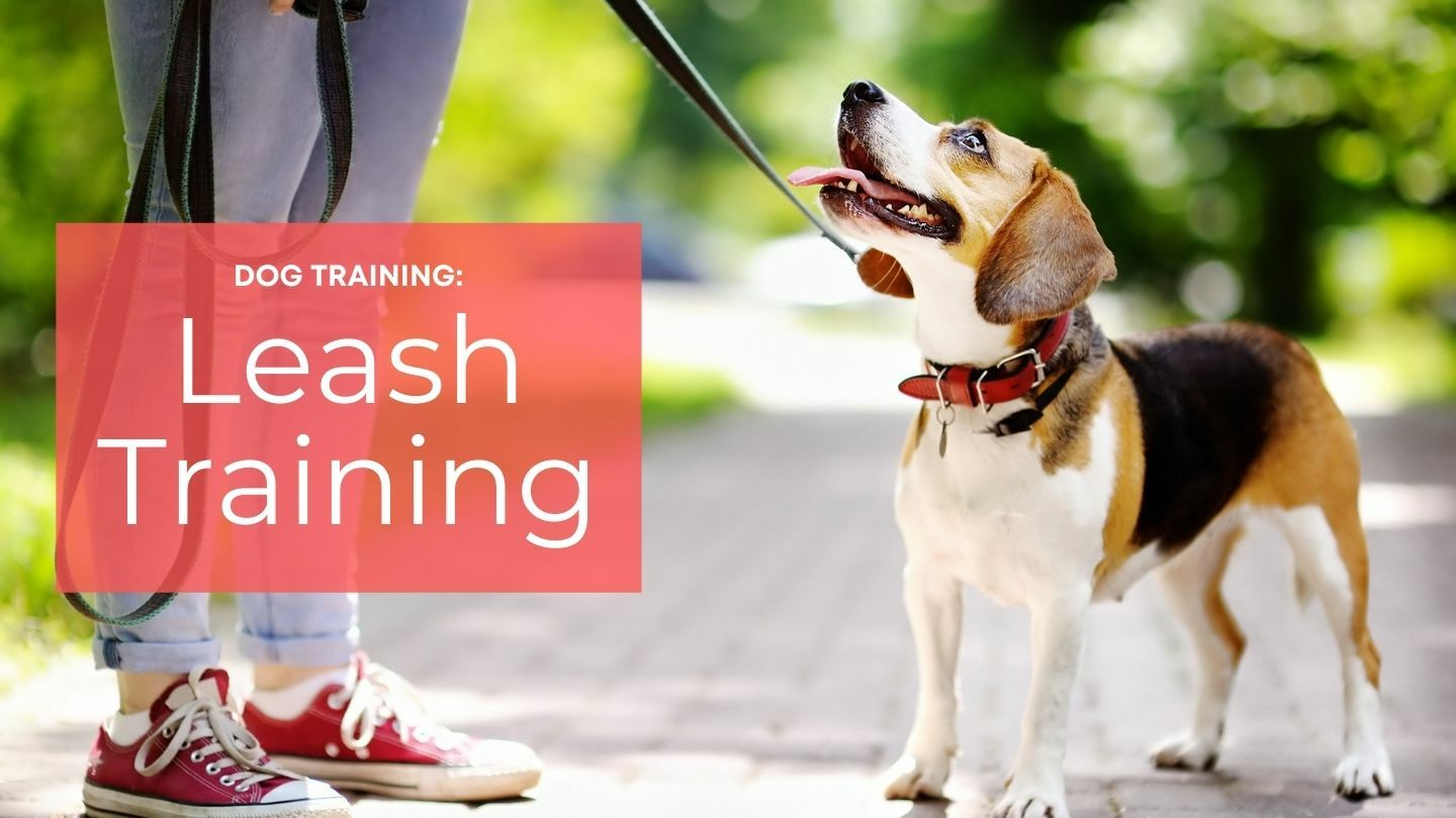 Dog Training: Leash Training: Simple Dog Training Methods - Online