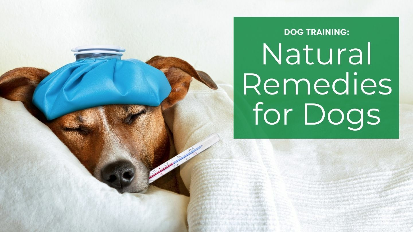Dog Training: Natural Remedies For Dogs - Online